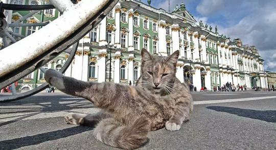 В Эрмитаже кошки живут до сих пор. Фото с сайта nkpiter.ru.