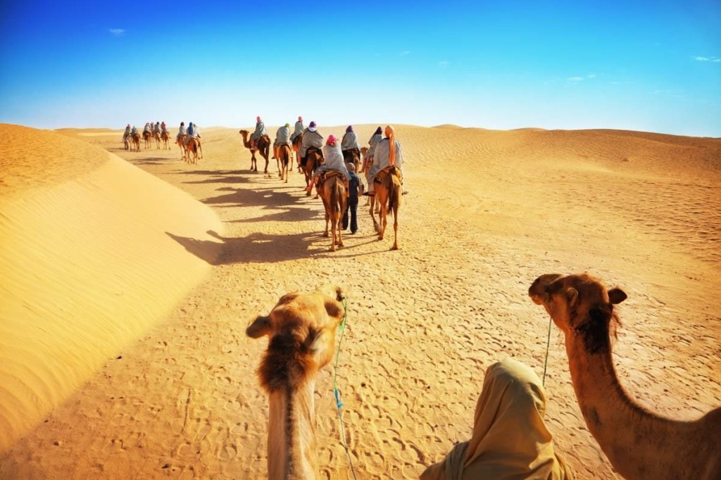 Не могу понять верблюдов