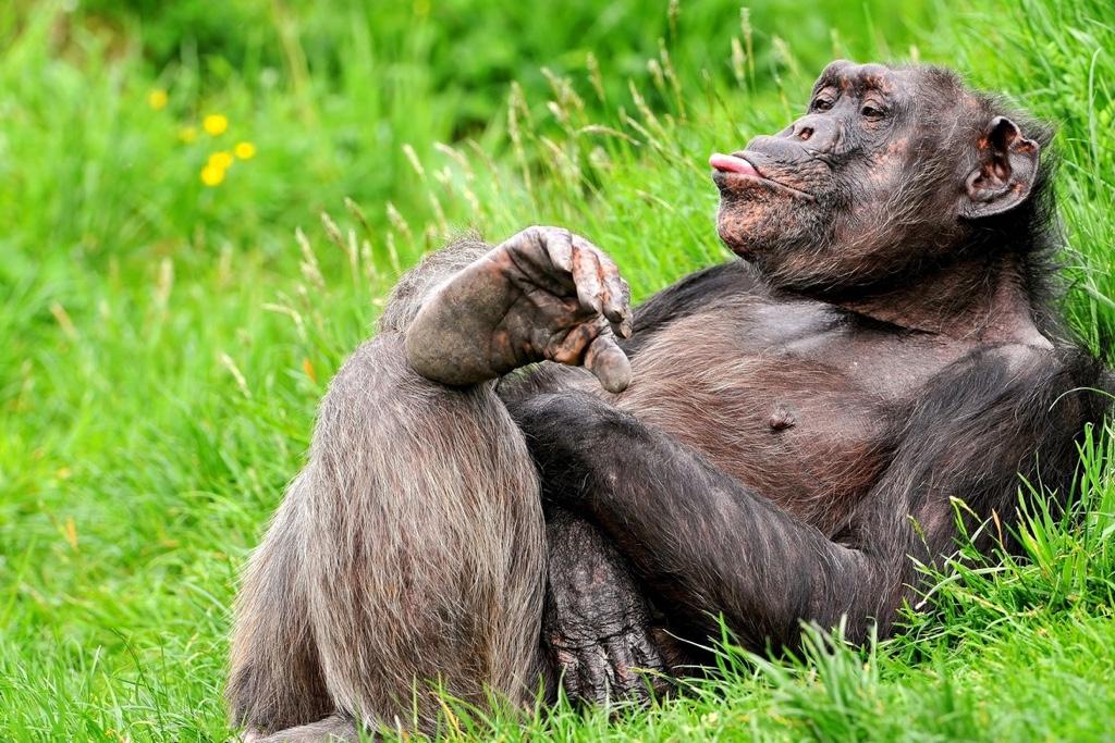 Как не стать скрюченной обезьяной?