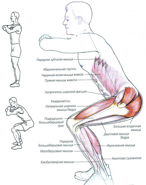 Как накачать мышцы в домашних условиях Как накачать Новичку