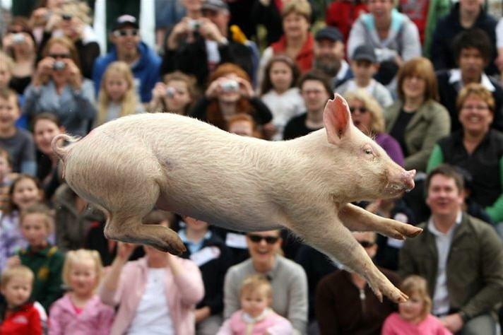Свинья дерет женщину фото 405-298