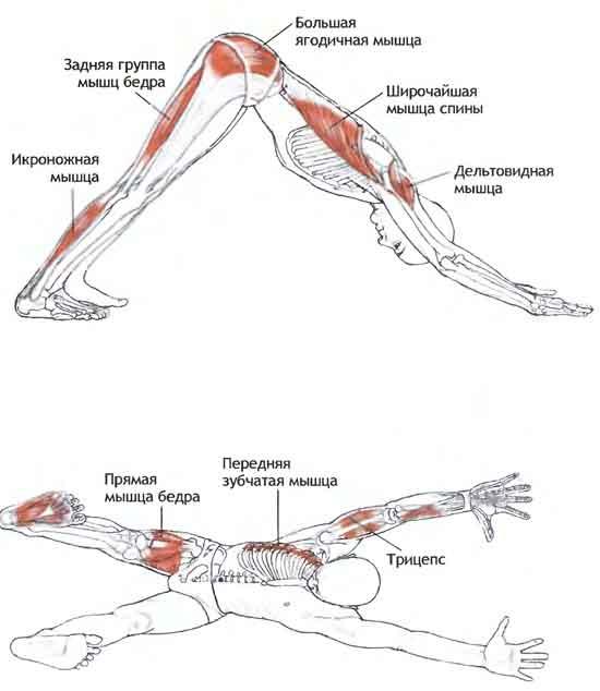 Похудение рук обертывание