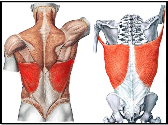 Секреты упражнение увеличении груди