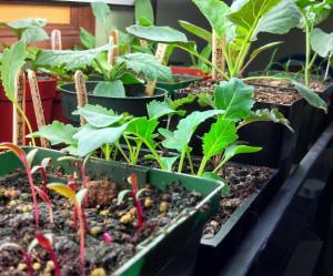 gardenstarts