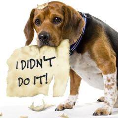 dog-ate-tax-return