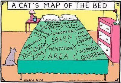 CatMapofOurBedblog