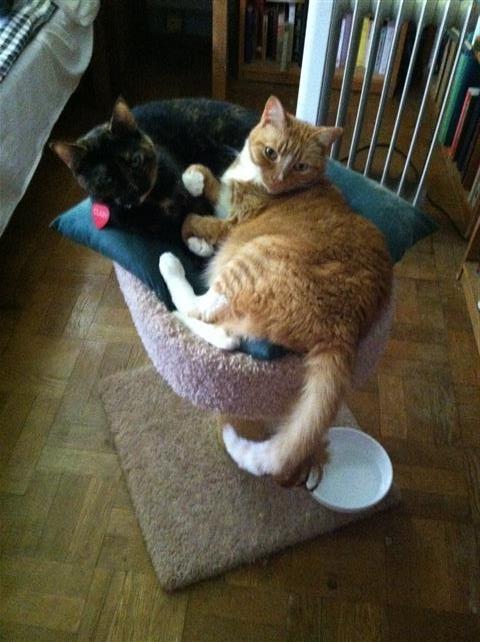 PussycatsBedroomCatTreeAug2014 (Small)