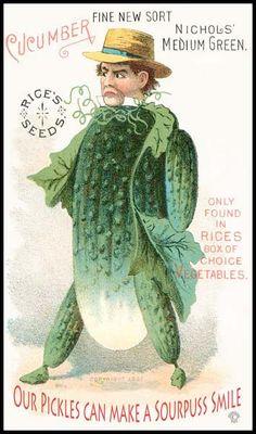 cucumberseedspickles