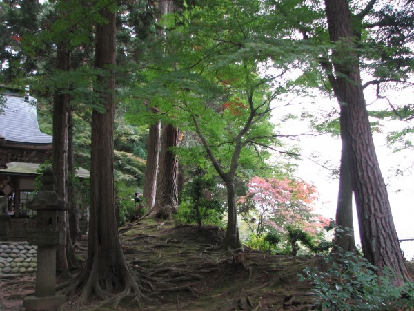 trees and roots Hiraizumi