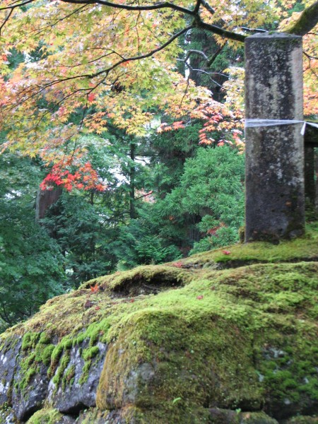 moss & fall color