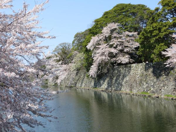 Hikone moat