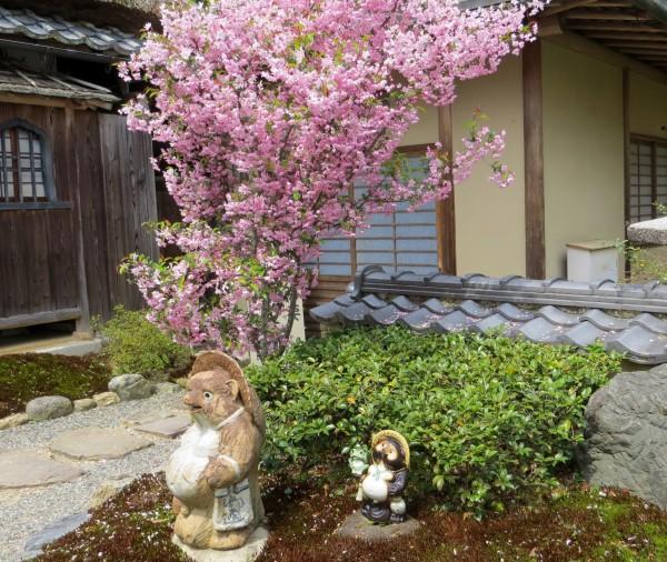 curious tanuki statues