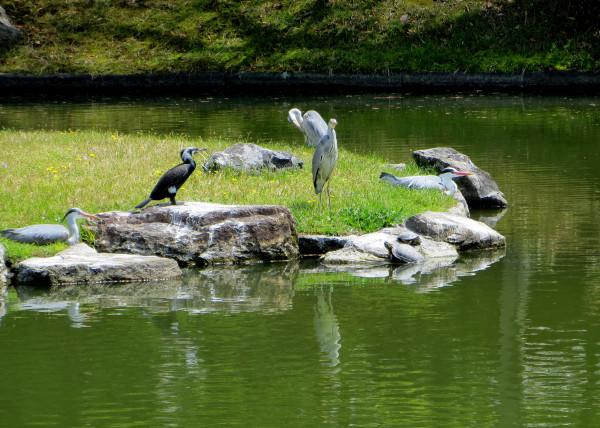 wildlife, Sento garden