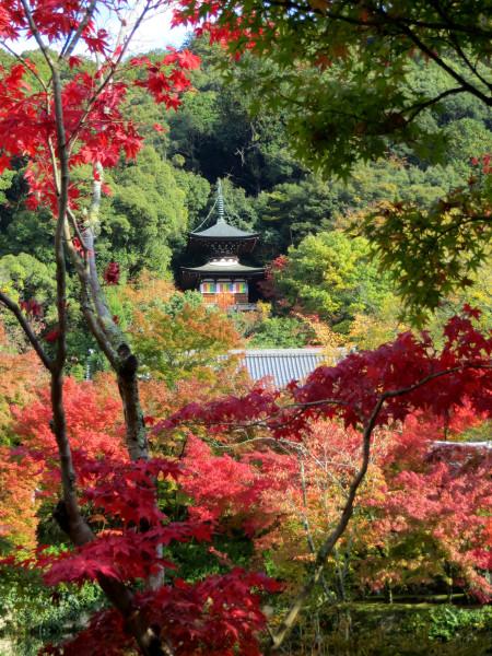 Tahoto pagoda glimpse