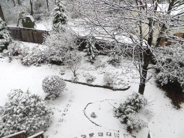 snowy backyard