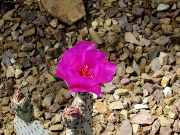 bright cactus flower