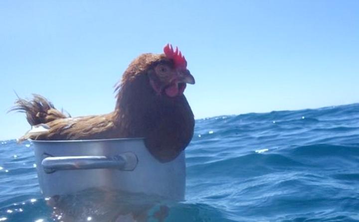 margin land Azov chicken fleet