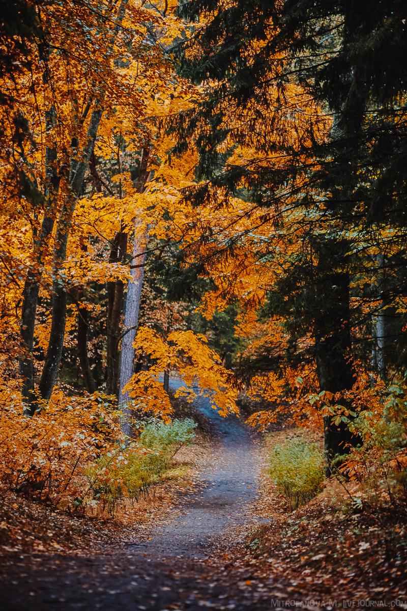 Осень в Павловском парке: mitrofanova_m — LiveJournal