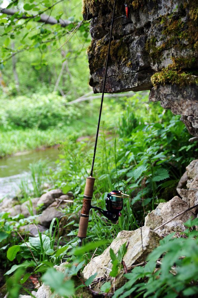 river_trout26