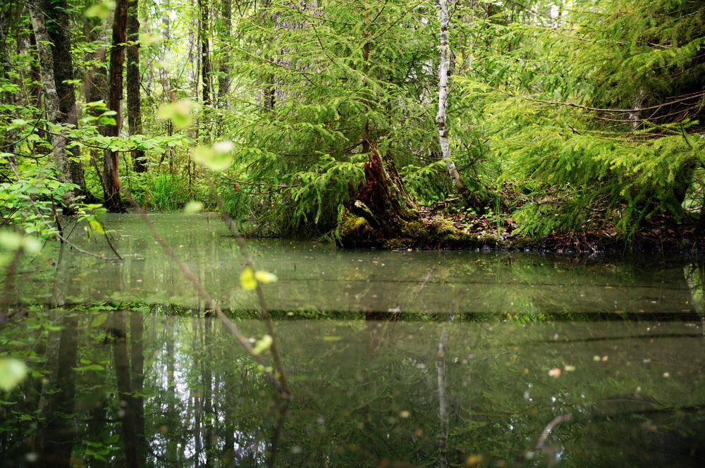 river_trout28