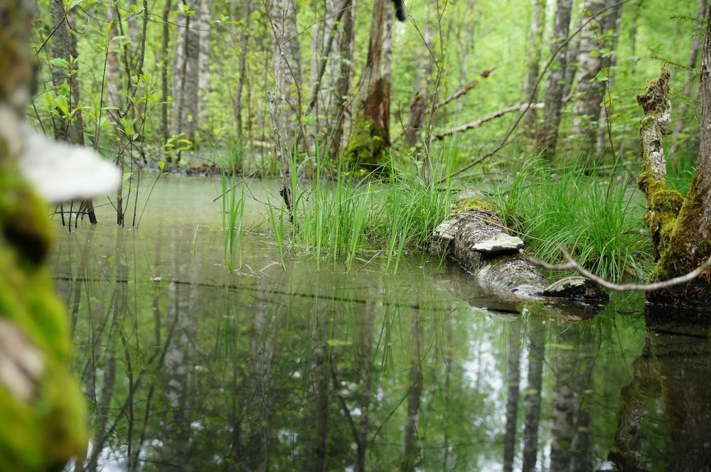 river_trout29