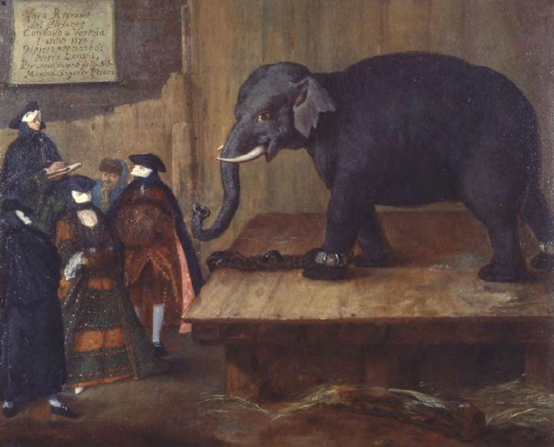 12-Пьетро Лонги - Слон - 1774.jpg