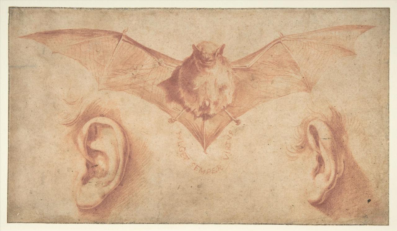 11-Летучая мышь и два уха - 1620-е годы.jpg