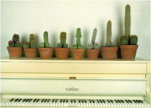кактусы юмор