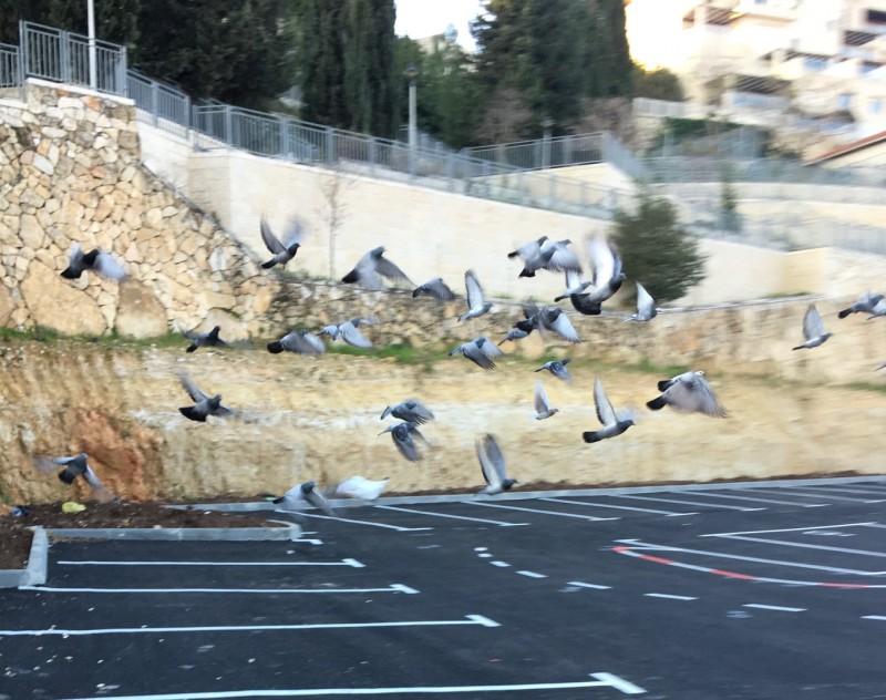 И пустыря сделали стоянку. Но голуби по-прежнему прилетают за своей добычей.