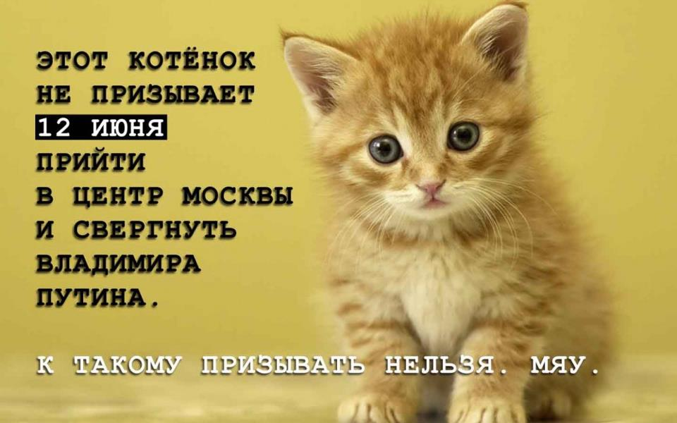 Картинки с надписями ты лучше всех котиков