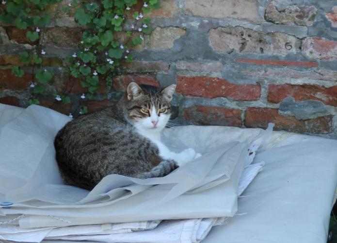 gatti liberi04