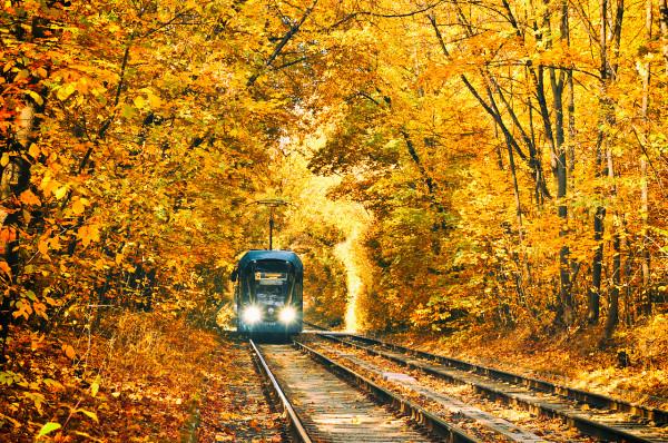 Осенний туннель с трамваями в Сокольниках