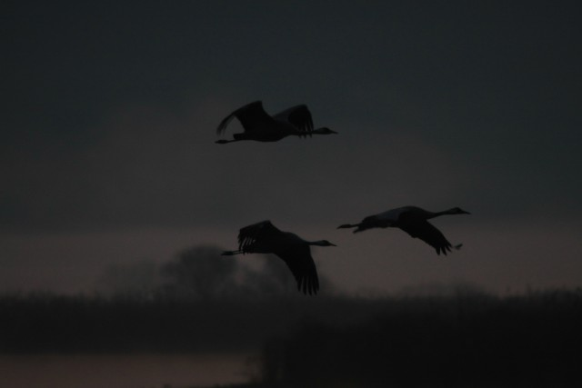 летят журавли, кричат журавли