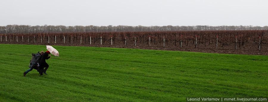 Собранный виноград разгружается с автотранспорта в бункер и с помощью шнекового транспортера поступает в цех.