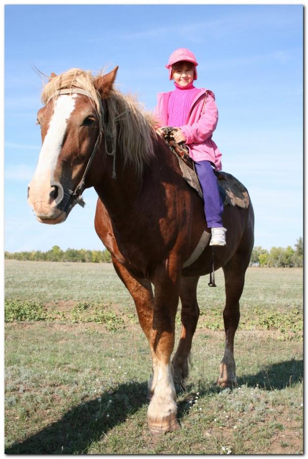 кони кира_003