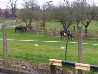 Wiltshire-20110224-00014.jpg
