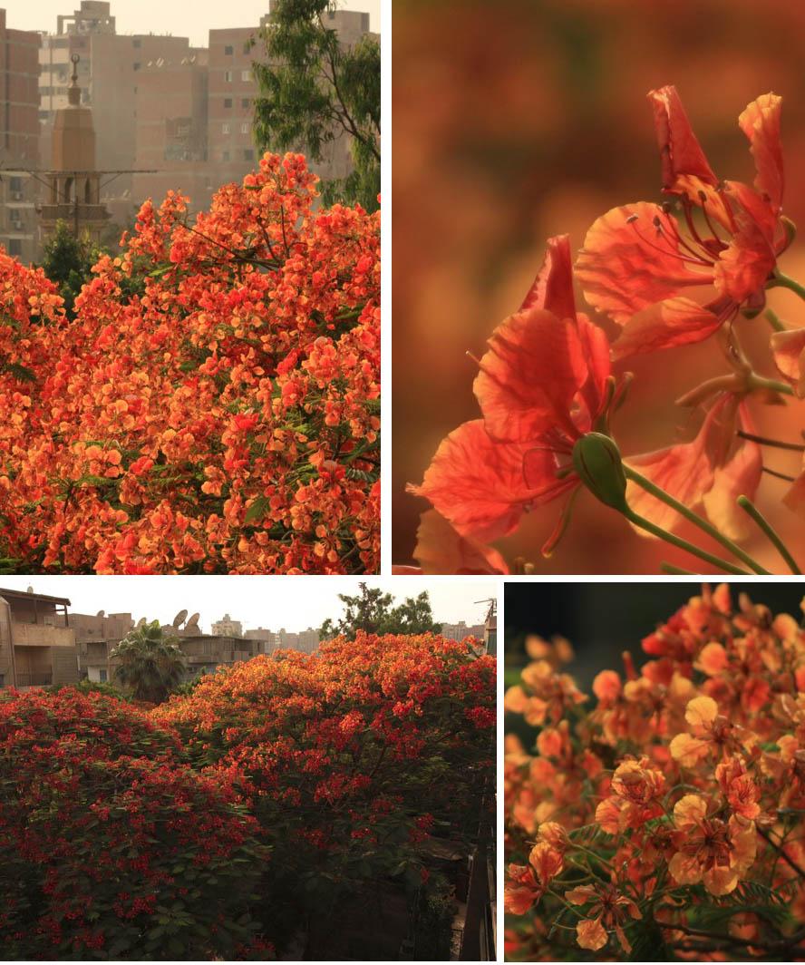 flamboyantly orange