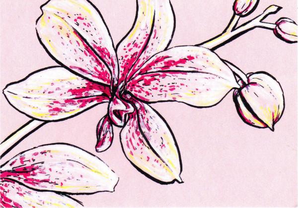 ellers orchid.jpg