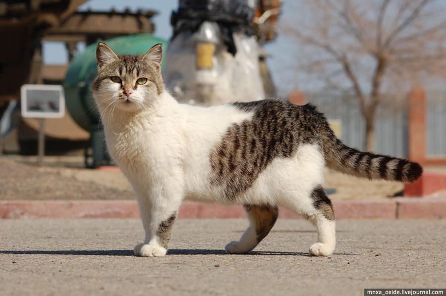 кот байконур