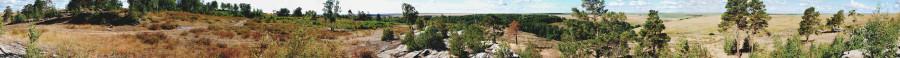 панорама сосны-мал