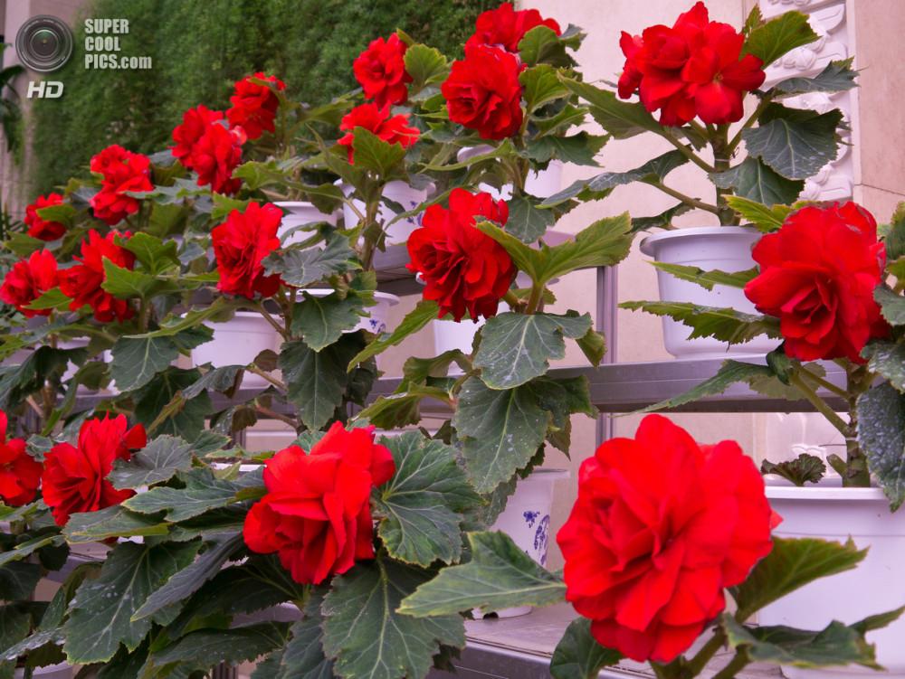 supercoolpics_04_09092011115255