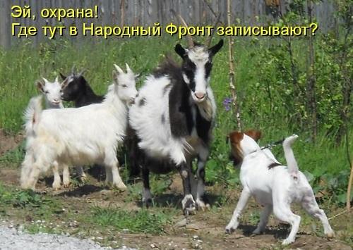 козёл1