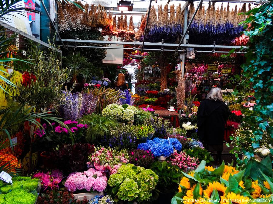 цветочные краснодарские рынки фото вряд