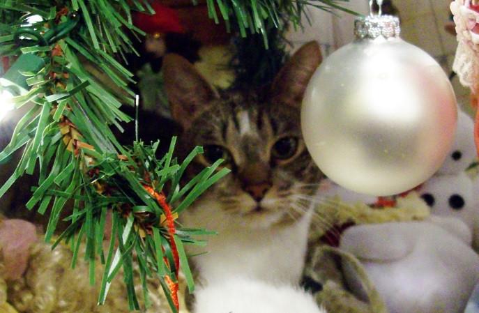 under the tree 1