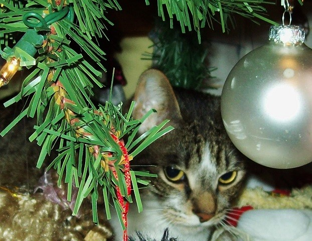 under the tree 2
