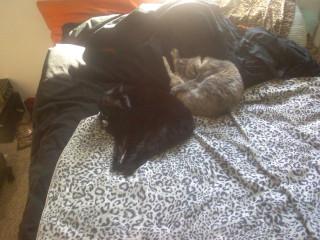 Sleeping cats equal adorable