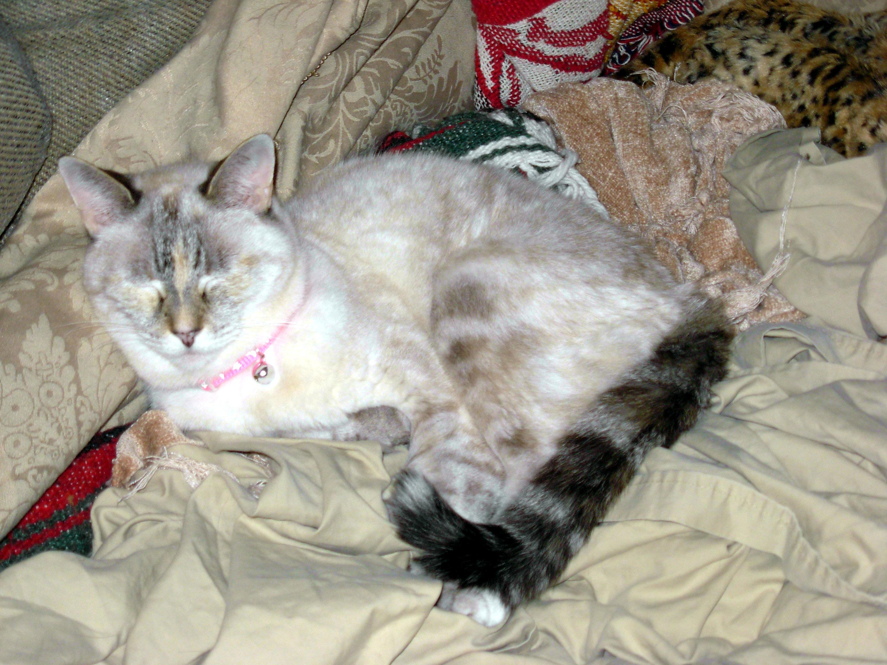 my cat, Little Miss Maya