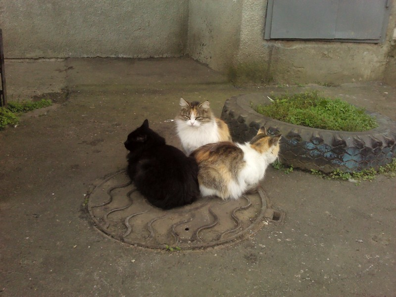 кошки греют жопку