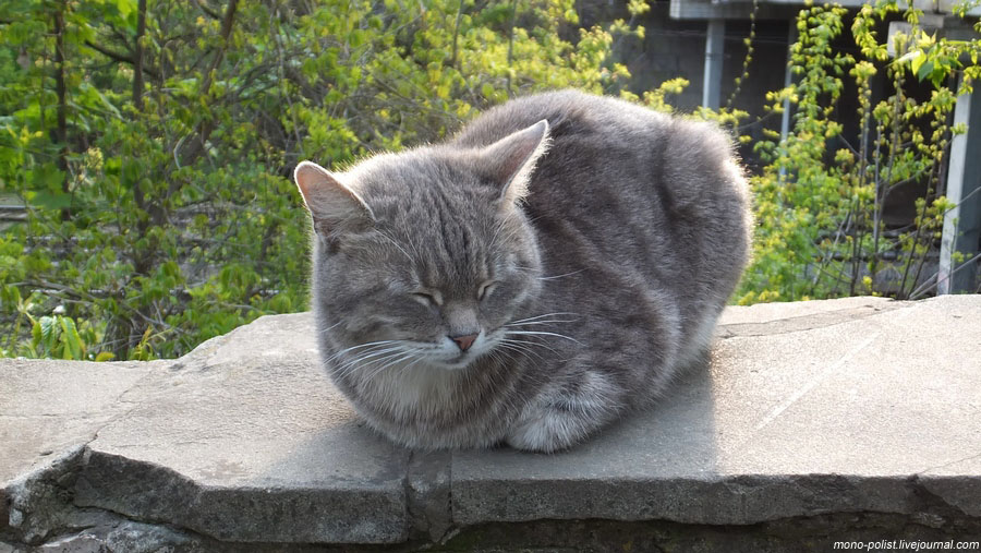 краснодарский котик