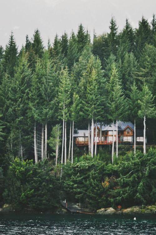 cabin fever (1)